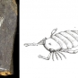 Double colour image of black rock with gray imprint of animal and drawing of caterpillar-like animal