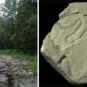Double colour image of forest stream and gray rock with curved trace fossils