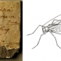 Double colour image of gray rock with white label in center and sketch insect with wings
