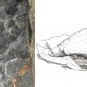Double colour image of gray rock with small black shape on it and sketch of a snail
