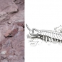 Double colour image of red sandstone with two rows of dots and a hammer and sketch of a giant millipede